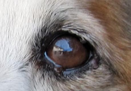 QUANDO PORTARE IL PROPRIO ANIMALE A FARE UNA VISITA OCULISTICA