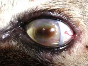 Nigrum - infezione da herpes